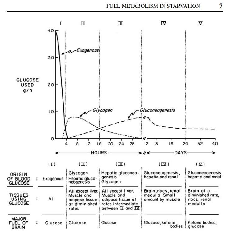 gliukoneogeneze